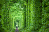 Fototapety Fantastic Real Tunnel of Love, green trees and the railroad