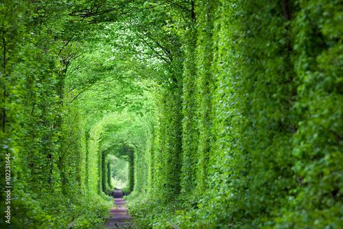 Fantastyczny prawdziwy tunel miłości, zielone drzewa i kolej