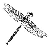 illustration with dragonflies - 102244486
