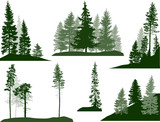 set of green pine and fir trees on white