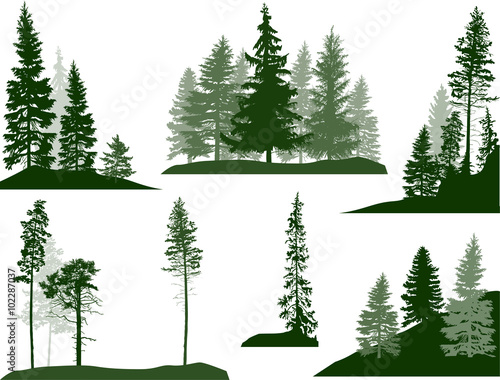 set of green pine and fir trees on white - 102287037