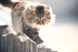 discouraged young cat going on a fence in winter