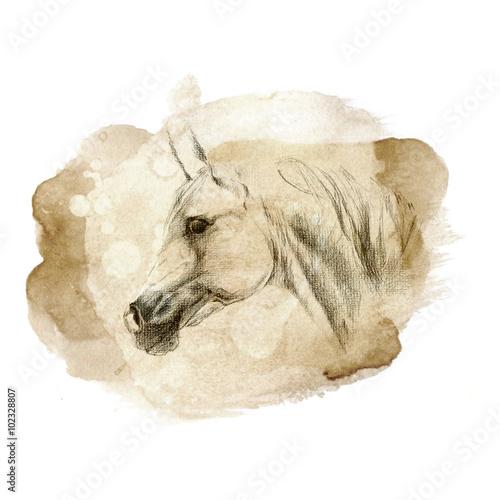 Juliste arabian horse