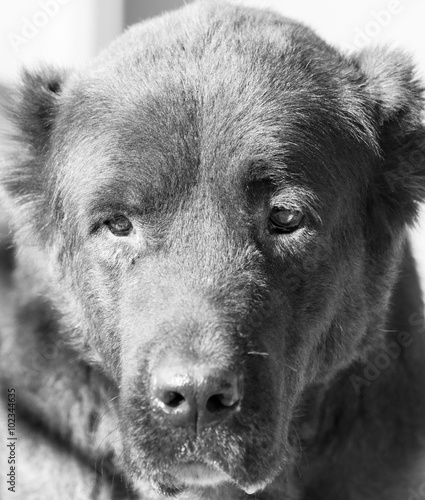 Portrait of a black dog on the nature