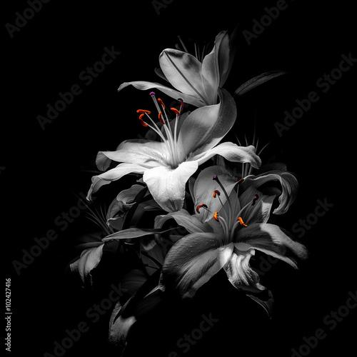 bukiet lilii na czarnym tle