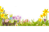 Fototapety Easter background with eggs and spring flowers