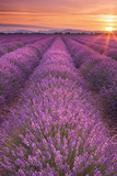 Sunrise over fields of lavender in the Provence, France - 102438053