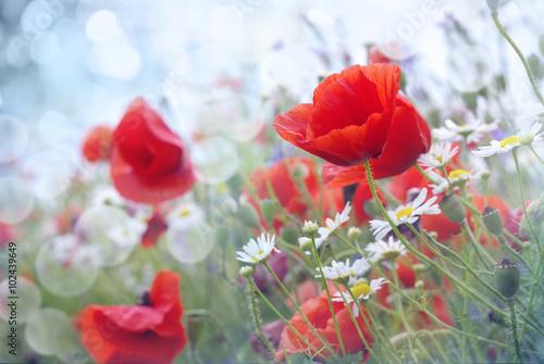 Panel Szklany Field of red poppy flowers