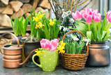 Fototapety Spring flowers. Pink tulips, snowdrops, narcissus