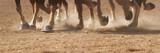 Hoof Dust