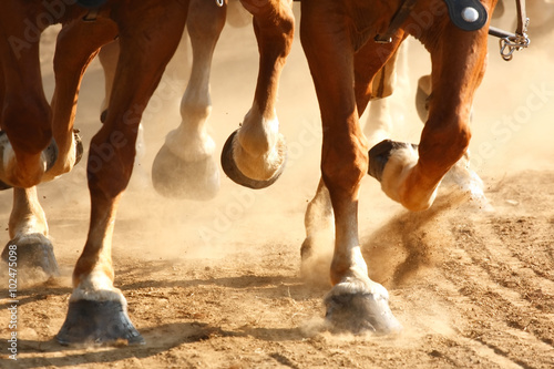 Galloping Horse Hooves © kateleigh