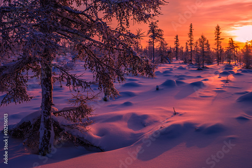 Fotobehang Aubergine Winter landscape with forest, cloudy sky and sun