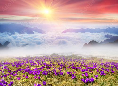Misty Carpathian Sea - 102525214