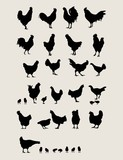 Roosters and Chicken Silhouettes Set
