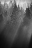 foresta avvolta da nebbia all