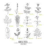Fototapety Hand drawn herbs and spices collection. Outline style seasonings
