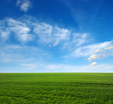 Fototapety green field