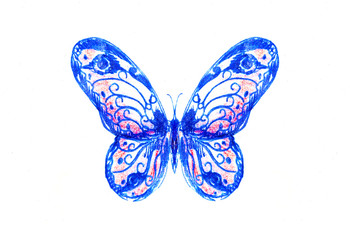 illustration of a butterfly, mixed medium, white color background.