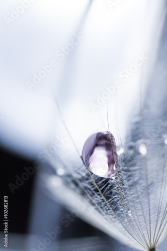 Macro, abstract composition with colorful water drops on dandelion seeds © ileana_bt