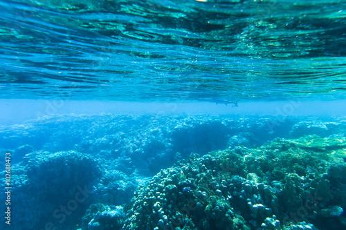 Tranquil underwater