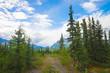 Gravel Path in Alaska Wilderness