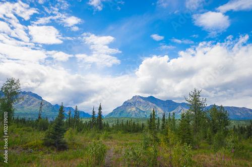 Poster Landschappen Green Meadow in Alaska Wilderness