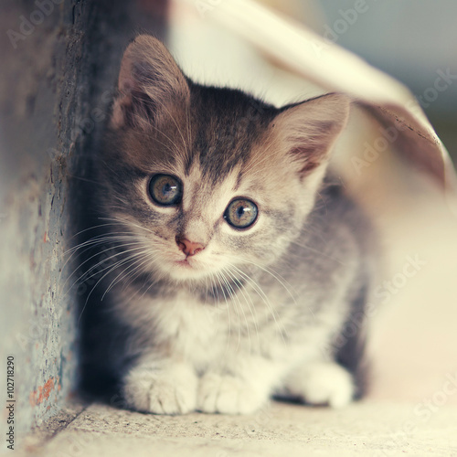 Fototapety, obrazy : little cute kitten  siting  outdoors
