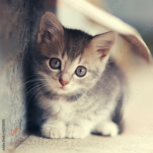 Zdjęcia na płótnie, fototapety na wymiar, obrazy na ścianę : little cute kitten  siting  outdoors