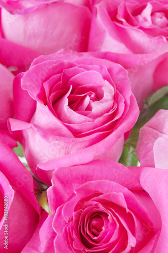 Staande foto Roses rose bunch isolated on white background
