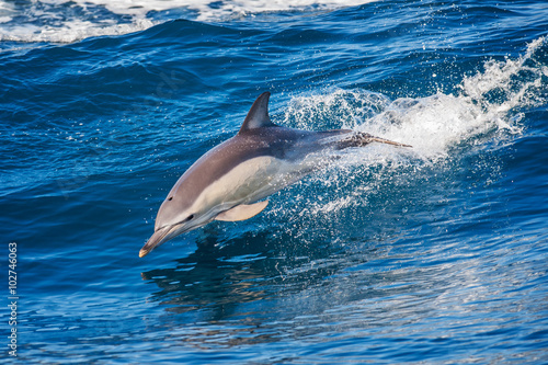 Fototapeta Dolphin jumping outside the sea