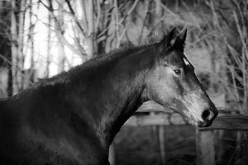 Pferdeportrait © Nadine Haase