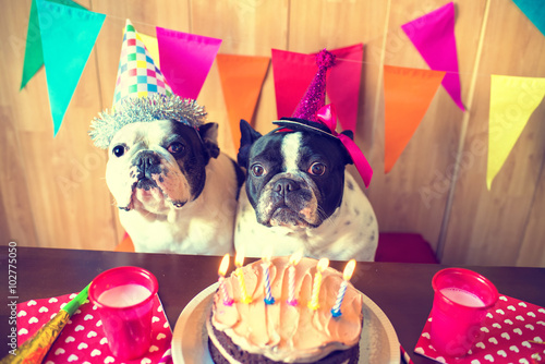 Poster Couple of dogs on birthday party