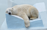 Белый медведь спит. - 102816459