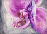 Fototapety Watercolor panting of pink orchid flower with small water drop.