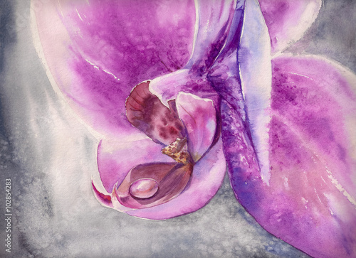 Watercolor panting of pink orchid flower with small water drop.