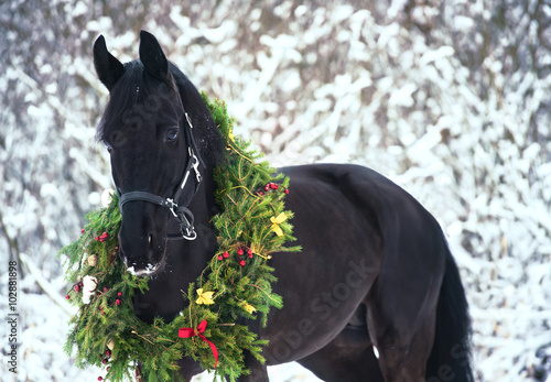Poster, Tablou Christmas portrait of black beautiful horse
