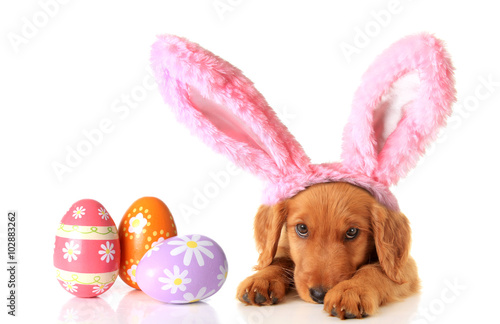 Poster Easter puppy