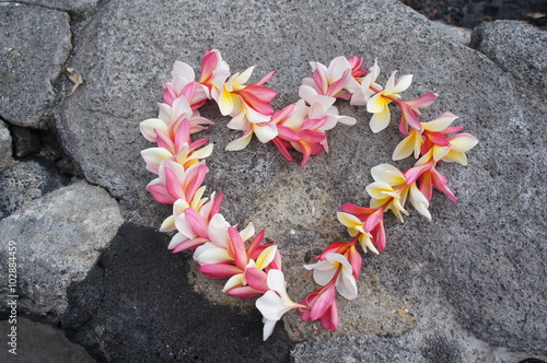 Fotobehang Plumeria Colorful Hawaiian plumeria lei made from fresh flowers arranged into a heart shape