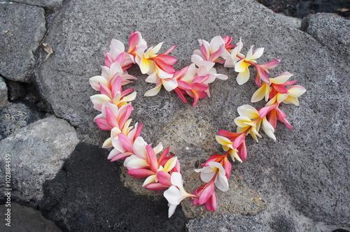 Aluminium Plumeria Colorful Hawaiian plumeria lei made from fresh flowers arranged into a heart shape