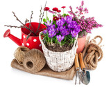 Garden flowers crocus in wicker basket