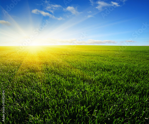field and sun - 102922454