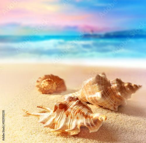 Obraz na Plexi Seashells on the sunset beach. Sand, sky and ocean.