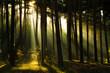 Sonnenstrahlen im Wald, Harz in Deutschland