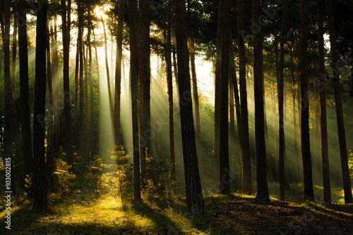 Plagát, Obraz Sonnenstrahlen im Wald, Harz in Deutschland