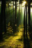 Sonnenstrahlen im Wald, Harz in Deutschland - 103004463
