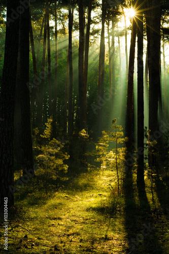 Sunbeams w lesie, Harz w Niemczech