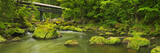Fototapety River with a covered bridge in a lush green forest