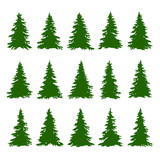 Fototapety Conifer Trees Set on the white background for Making Forest Backgrounds. Vector