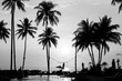 Silhouettes of palm trees on a tropical beach, black and white photography.