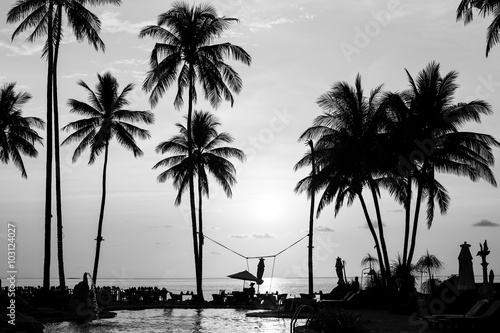 Silhouettes of palm trees on a tropical beach, black and white photography Plakát
